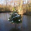 Plaatsing kerstbomen langs de Winterdijk
