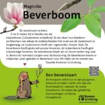 Beverboom