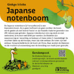 Japanse Notenboom