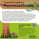 Mammoetboom