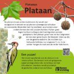 Plataan